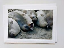 Baby Seals 🐳🐚 Blank Greeting Card w/ Envelope, Sold by Artist