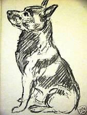 Lucy Dawson 1937 SCHIPPERKE Dog Art Print Matted