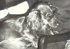 Original 1960s-70s Large German Real Photo- Animal- Dog- Dachshund- Wear Glasses