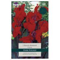 Arbusto esotico Estate fioritura Bottlebrush ippocastano Aesculus parviflora Pest libero