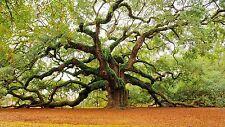 4 x  English Oak