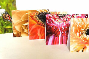 Blank card - Flowers for birthday, greeting or thanks