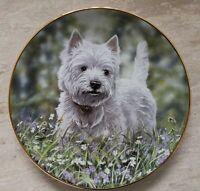 Porzellan Hundeteller Westie Wandteller Sammelteller Westie Aufgepasst  Neu