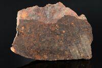 Meteorite Brachinite primitive Achondrite  NWA 11756  Slice 3.57g