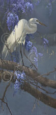 Egret in Wisteria by Matthew Hillier Art Print Poster Wildlife Bird 13x19