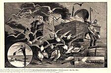 Antique print California / californian shore whale hunt 1887 whaling industrial
