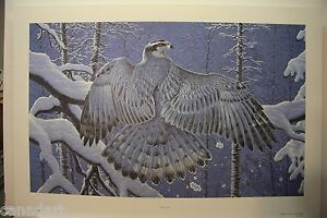 Randy FEHR Boreal Ghost LTD art print GOSHAWK RARE mint print COA