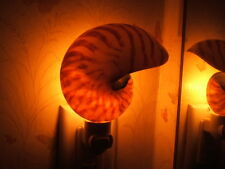 "4""  Natural Nautilus Shell Night Light; Nautilus pompilus Seashell, nightlight"