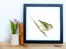 Gold Crest Original Watercolour painting, Limited Edition A5 Wildlife Print