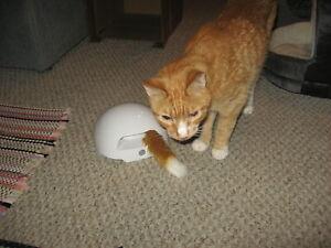 PetSafe FroliCat Fox Den Automatic Interactive Cat Toy Kitten Kitty Game NEW