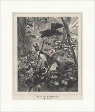 Auch ein Eierfreund. Eichhörnchen Nest Zaunkönig Eier Geäst Jagd Waidmann 0496