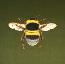 TEX EX ORIGINAL FLORA & FAUNA BUMBLEBEE BEE CUSHION PANEL OLIVE GREEN VELVET