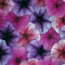 Petunia- Veigned Mix- 100 Seeds - 50 % off sale