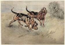 BLOODHOUND DOG LIMITED EDITION PRINT - DRY-POINT ENGRAVING - Henry Wilkinson