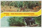 Unused Postcard Greetings from The Pocono Mountains Pennsylvania PA Deer Bear