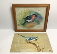 Watercolour Painting Birds One Signed Alan Codd Mounted Framed Blue Jay On Noaed