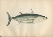 "1877 Couch's ""BONITO""  Sea Fishes - Hand-Coloured Fish Lithograph Print"