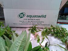 Live aquarium plants -10 varieties of aquatic plants for setting an aquarium