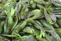 "3"" Green Pumpkin Chartreuse Swirl Craw Flapper Jig Trailer Yo Mama Bass Fishing"