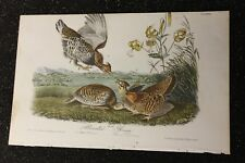 AUDUBON'S BIRDS of AMERICA First Edition Octavo Plate #296 PINNATED GROUSE