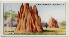 Termite White Ant Nest 85+ Y/O Trade Ad Card