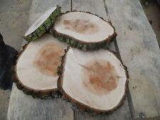 5 Baumscheiben, Holzscheibe, 13-15 cm, Weide