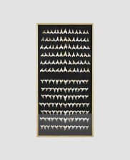 More details for framed fossil shark teeth - frame  1.2m