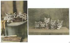 Hampshire Printed Collectable Animal Postcards