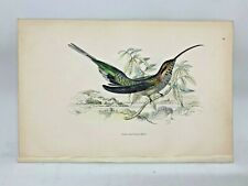 DELUXE ED Hand-colored Plates 1840 Jardine History Hummingbirds #28 Scaly Backed