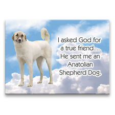 Anatolian Shepherd Dog True Friend From God Magnet