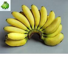 20 Banana Plant Seeds- Wild Edible Banana - Musa balbisiana
