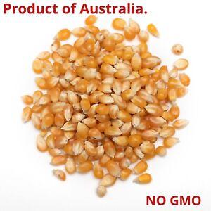 ORGANIC BULK 1 KG POPCORN Kernels Corn Seeds - PRODUCT OF AUSTRALIA  - POPCORN