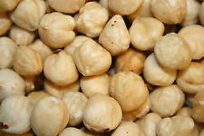 HAZELNUTS (FILBERTS) BLANCHED RAW UNSALTED, 1LB