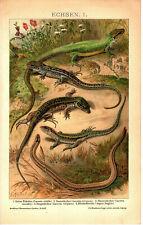 Lithographie Echsen Original von 1906 Illustration Bild Eidechsen Reptilien RARE