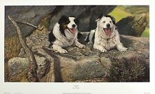 "MARTIN THACKSTONE ""Posing"" border collies dog NEW art SIZE:30cm x 57cm  RARE"