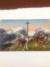 Postcard Used Dogs In Geneva