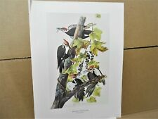 "PILEATED WOODPECKER, Color Print, Bird,1966,NY Historical Society, 20""x15"""
