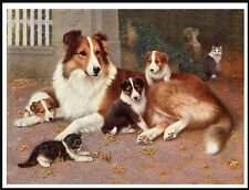 ROUGH COLLIE WITH PUPS AND A KITTEN CHARMING VINTAGE STYLE DOG PRINT POSTER