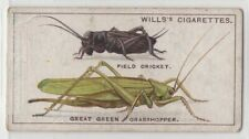 How Grasshoppers and Crickets Chirp or Sing Insects  95+  Y/O Ad Trade Card