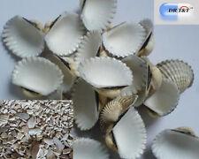 DRT&T  Wa Leng Zi (Coquillage) 100g Herbes Sèches