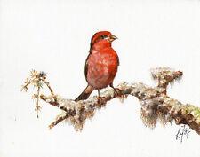 Original Oil Bird Portrait Painting Art Artwork Purple Finch Tree Red Signed