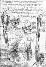 Leonardo Da Vinci Muscles of the Upper Extremity  Anatomy Poster Print Art
