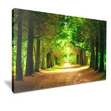 Green Forest Park Path Canvas Wall Art Picture Print 76cmx50cm