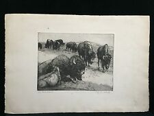 VINTAGE Buffalo Herd Etching Plate Marks MONTANA Wildlife ORIGINAL SIGNED