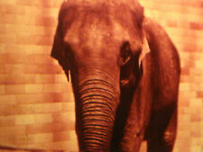 Beautiful  16mm FILM HOME MOVIE  Visit to a ZOO  -- 1940s  New York State