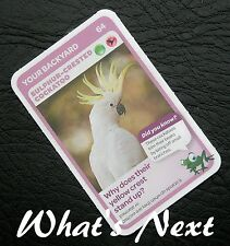 Woolworths <<AUSSIE ANIMALS>> Card 64/108 YOUR BACKYARD Sulfur-Crested Cockatoo