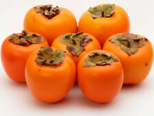 30Pcs Japanese Persimmon Tree Seeds Diospyros kaki Best Organic Tasty Berry