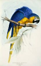 Edward Lear 1832 Blue and Yellow Macaw 7x5 inch Print