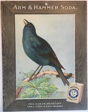 Birds - Arm & Hammer Advertising Store Display Card Sign - Indigo Bunting J5