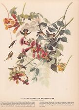 "1942 Vintage AUDUBON BIRDS #47 ""RUBY THROATED HUMMINGBIRD"" Color Art Plate Litho"